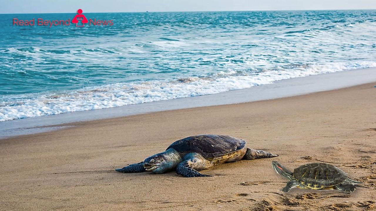 Sea turtles died